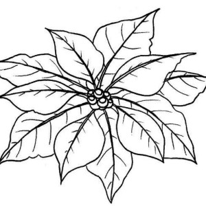Poinsettia Drawing Outline at GetDrawings.com | Free for personal ...