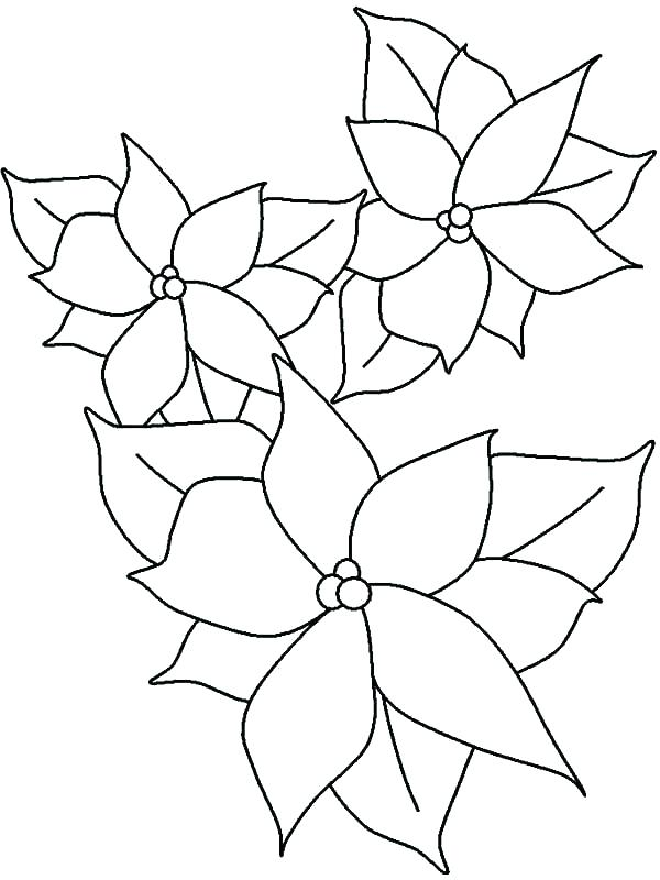 600x800 Poinsettia Coloring Pages Affan