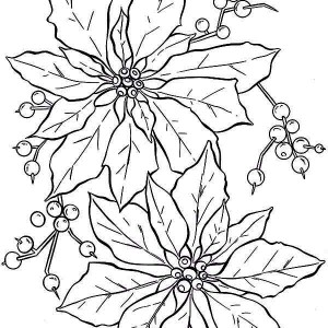 300x300 How To Draw Poinsettia Coloring Page How To Draw Poinsettia