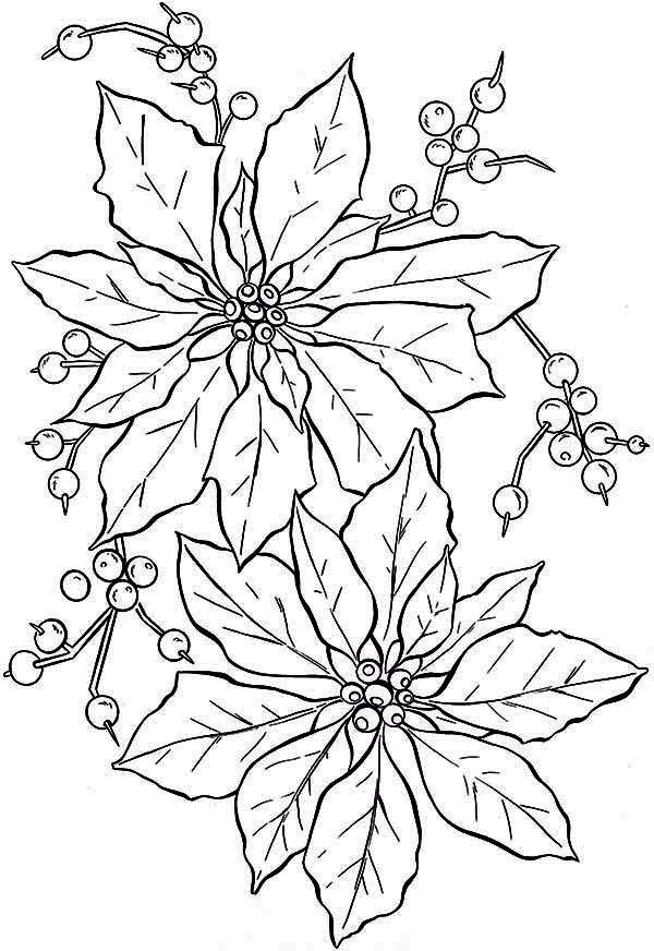 Poinsettia Flower Drawing
