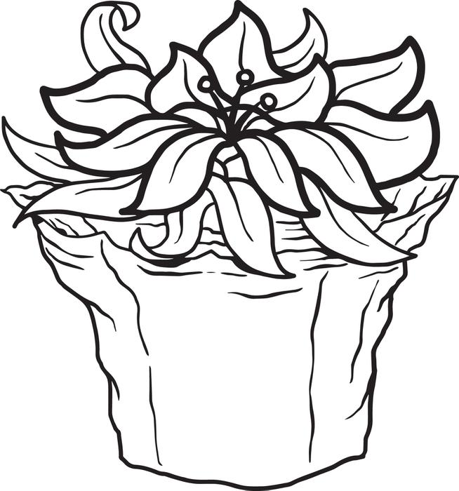 Poinsettia Flower Drawing at GetDrawings.com   Free for personal use ...