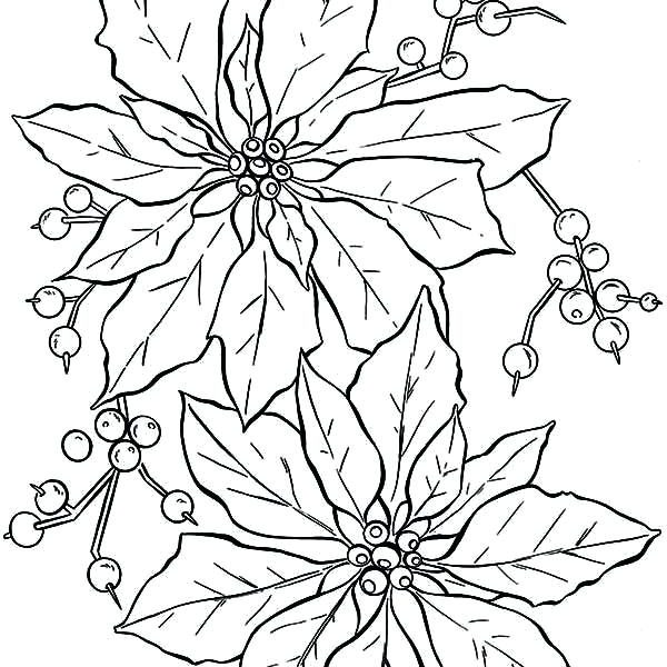 600x600 Legend Of The Poinsettia Coloring Page Poinsettia Coloring Pages