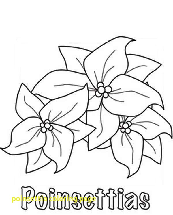 600x744 Poinsettia Coloring Page With Poinsettia Flower Coloring Page