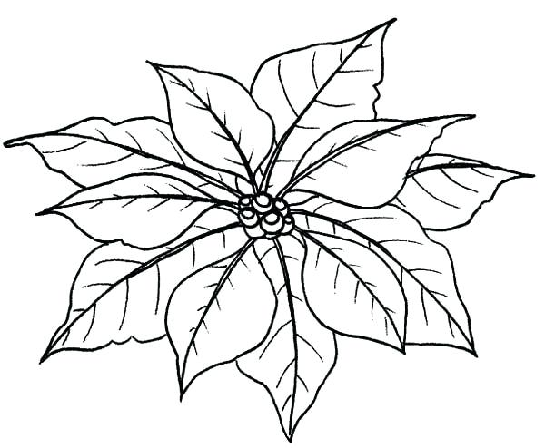 600x494 Poinsettia Coloring Sheet Leaves Of Poinsettia Coloring Page