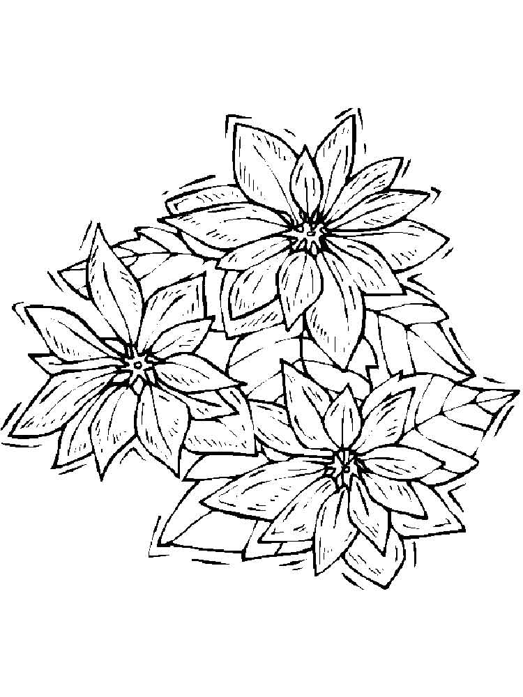 750x1000 Poinsettia Flower Coloring Pages. Download And Print Poinsettia