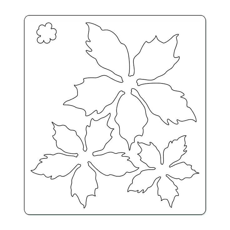 736x736 Poinsettia Coloring Pages Affan