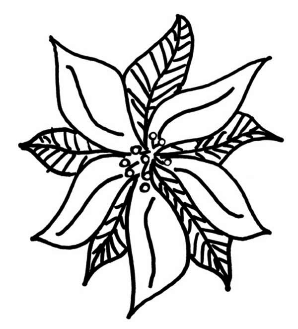 600x662 Drawing Of Poinsettia For Poinsettia Day Coloring Page Coloring Sun