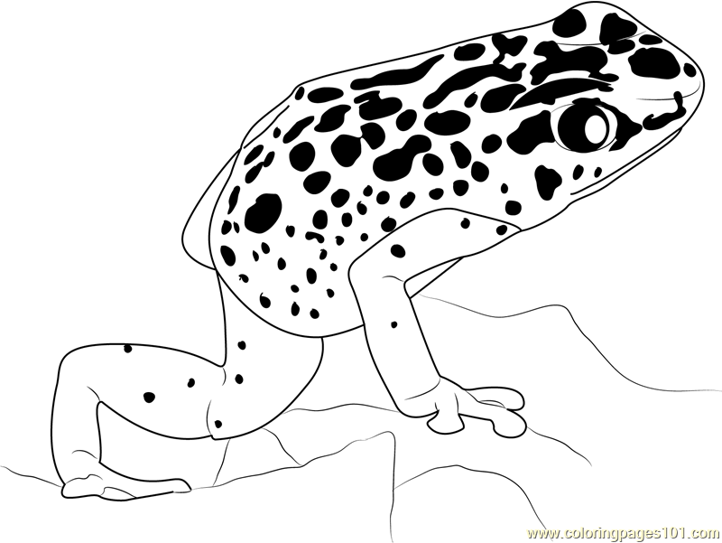 poison dart frog drawing at getdrawings com free for personal use