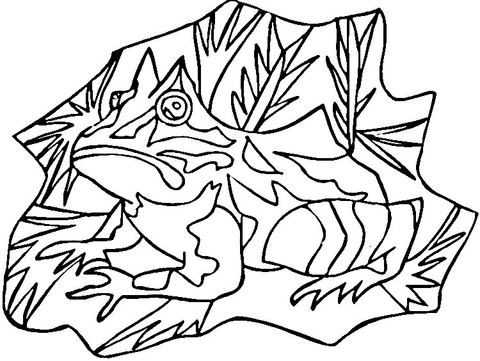 480x361 Poison Dart Frog Coloring Page Free Printable Coloring Pages