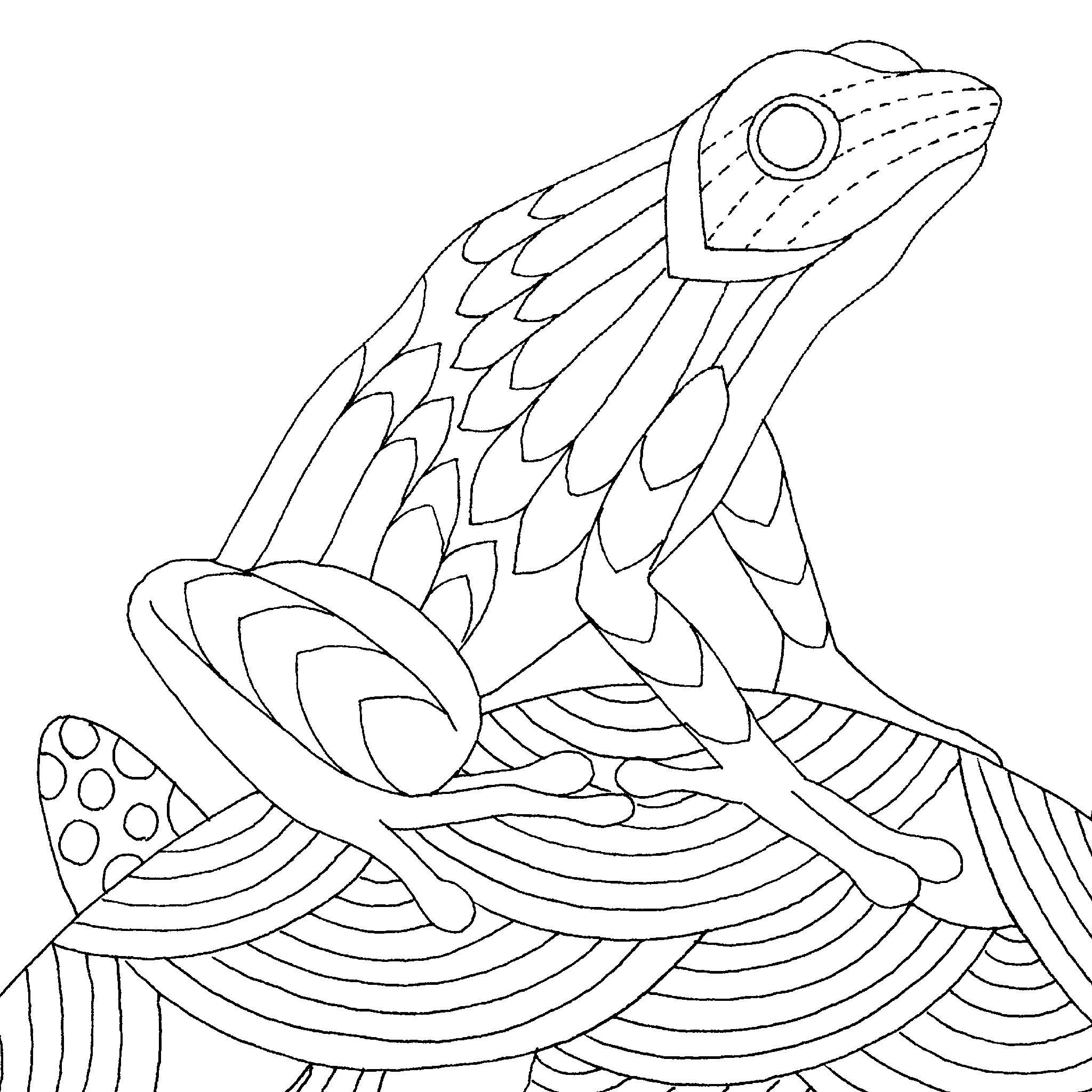 2048x2048 Poison Dart Frogs Millie Marotta