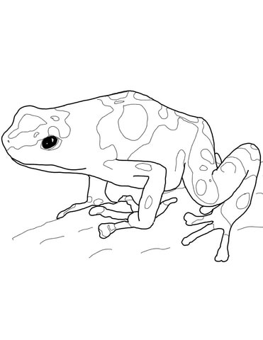 371x480 Yellow Banded Poison Dart Frog Coloring Page Free Printable