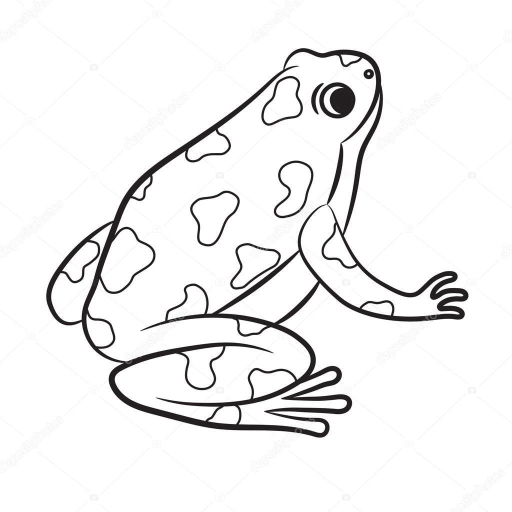 1024x1024 Cartoon Of Poison Dart Frog. Coloring Page. Vector Stock Vector