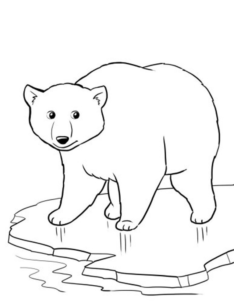 768x995 Baby Polar Bear Coloring Pages