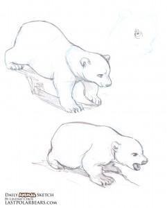 241x300 Daily Animal Sketch 077 Poses Sketches, Polar Bear