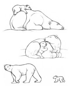 236x305 How To Draw A Bear Outline Drawings, Outlines And Bears