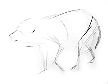 350x272 How To Draw A Baby Polar Bear Lesson