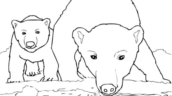 570x320 Outline Drawing Of A Polar Bear Bear Mother And Bear Cubs Coloring