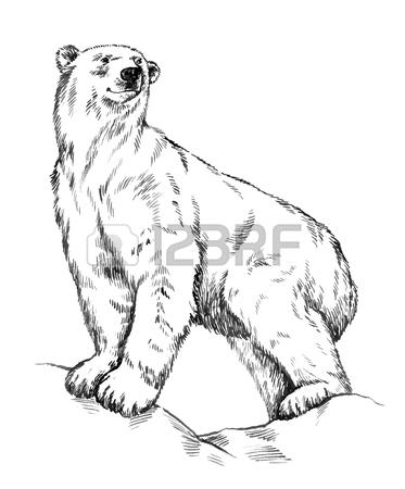 373x450 Polar Bear Stock Photos. Royalty Free Business Images