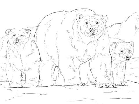 480x360 Polar Bear With Two Cubs Coloring Page Free Printable Coloring Pages