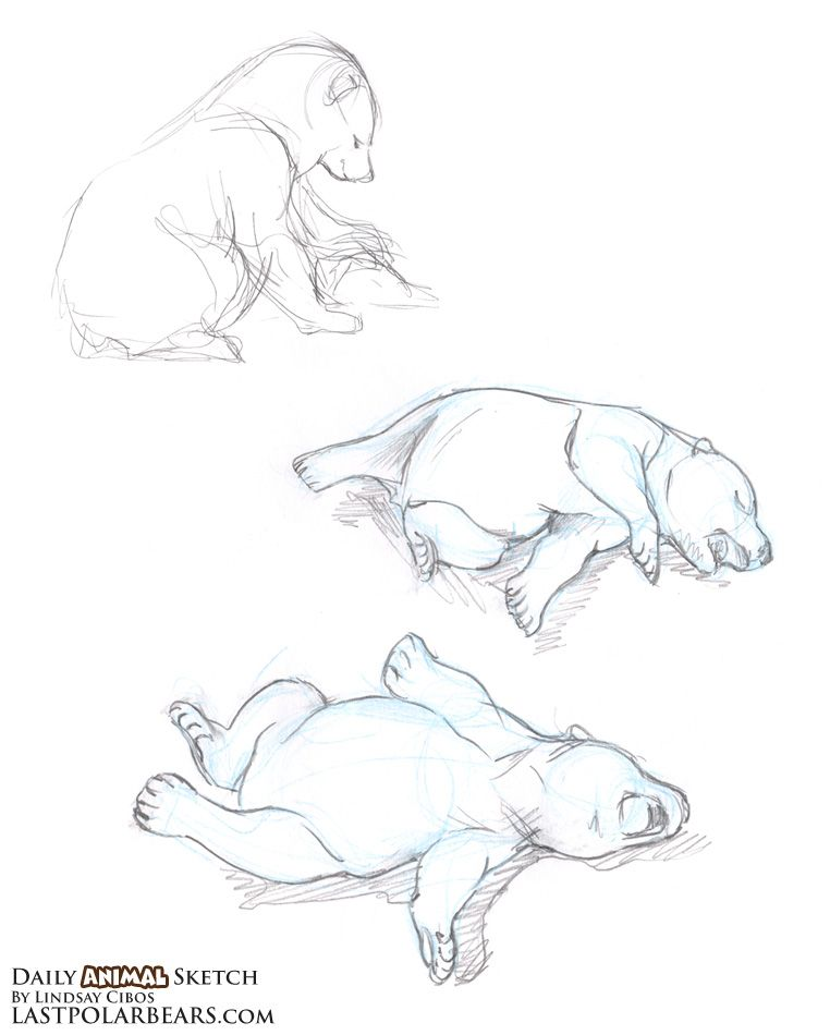 762x950 The Last Of The Polar Bears