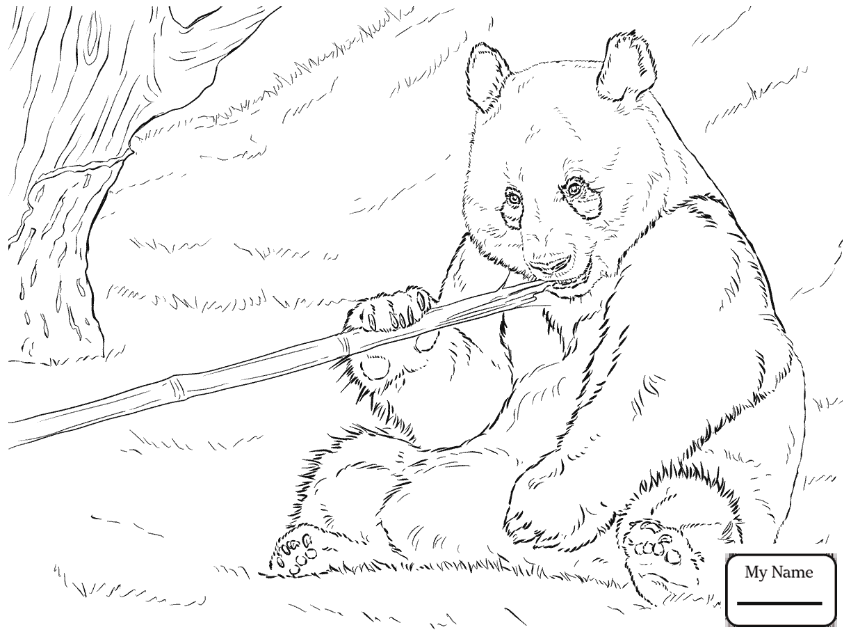 1224x918 Bears Cute Polar Bear Cub Mammals Coloring Pages For Kids