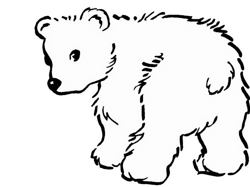 800x600 Drawn Polar Bear Coloring Page