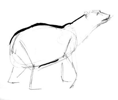 412x350 How To Draw A Polar Bear