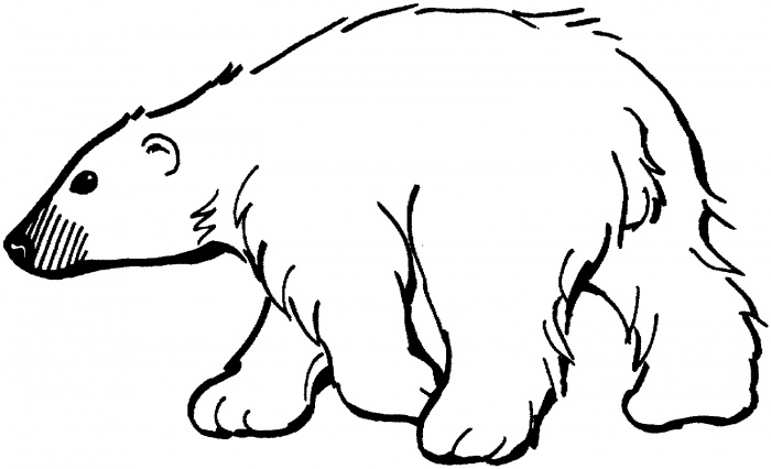 700x426 Polar Bear Outline Drawing Polar Bear Clip Art