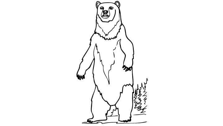 720x408 Polar Bear Standing Drawing