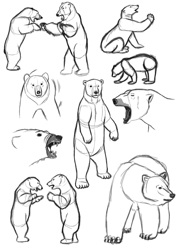 1000x1389 Polar Bear Standing Up Drawing