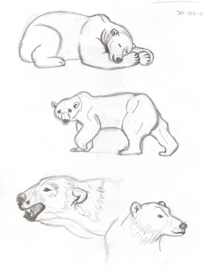 412x542 Polar Bear Sketches