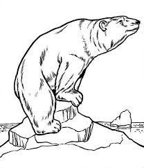 208x242 Realistic Polar Bear Drawing