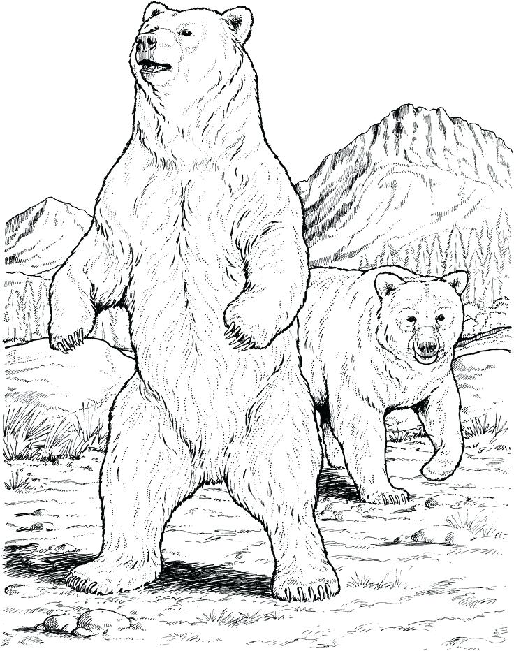 736x932 Coloring Pages Of Polar Bears Polar Bear Coloring Page Super