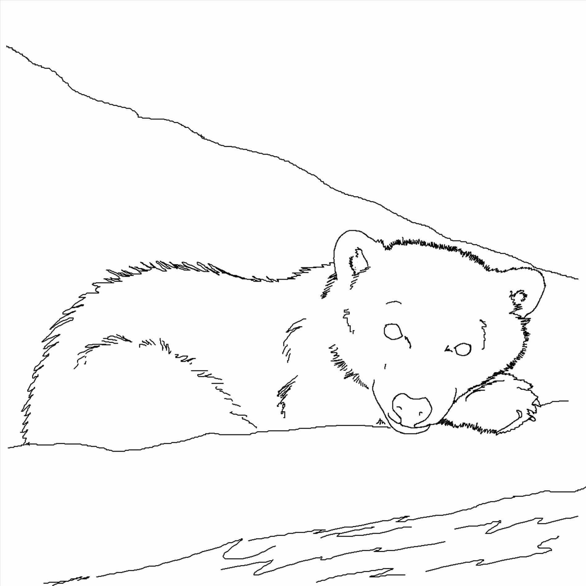 1900x1900 Polar Bear Coloring Sheet Page Image Clipart Images