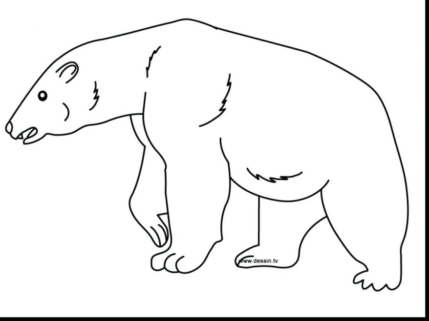878x658 Bear Coloring Page 135 Amazing Polar Pictures To Color Baby Polar