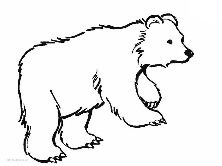 736x552 The Best Polar Bear Outline Ideas On Polar Bear