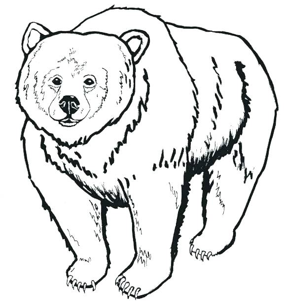 576x615 Top Rated Polar Bear Coloring Pages Images Polar Bear Coloring