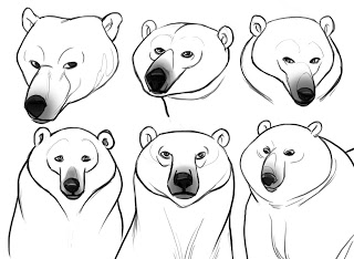 Polar Bear Face Drawing