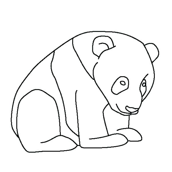 Polar Bear Face Drawing At Getdrawings Com Free For Personal Use