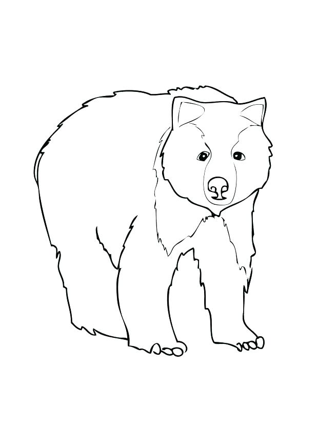 618x824 Elegant Bear Face Coloring Page For Bear Coloring Pages Bear