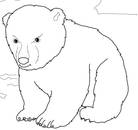 480x452 Bear Face Coloring Page