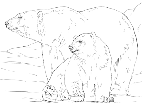 480x360 Polar Bear Plus Baby Looking Side Coloring Page
