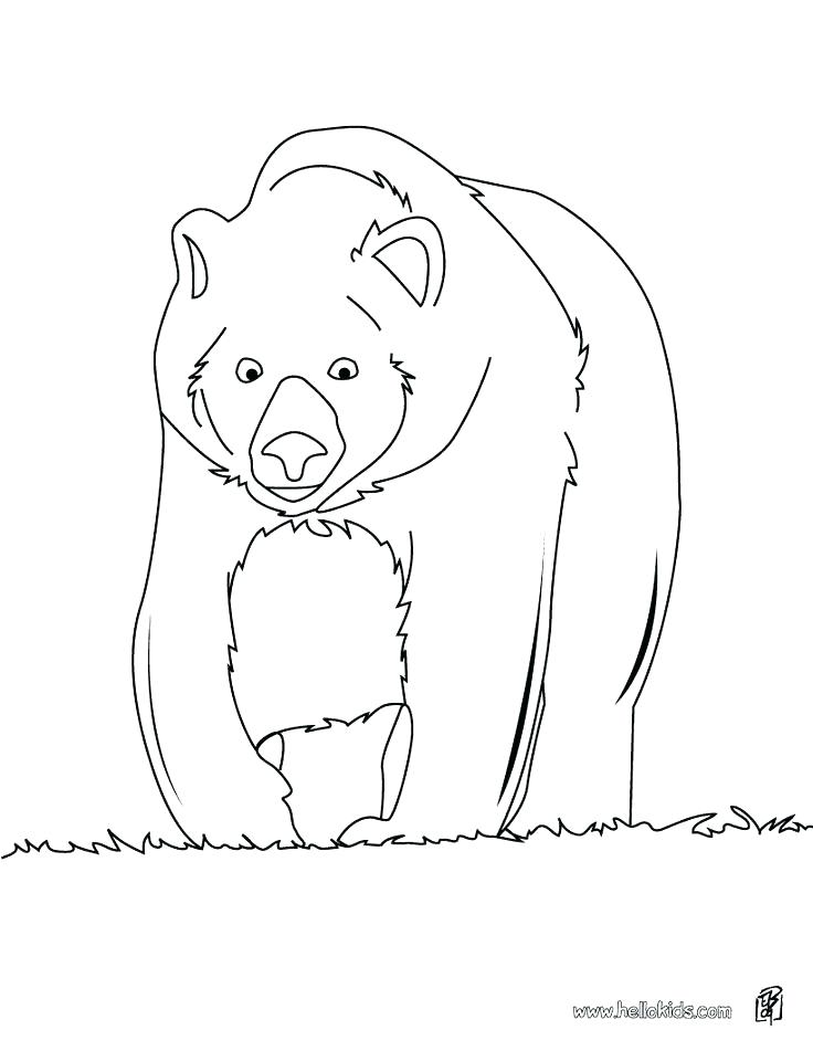 736x951 Bear Face Coloring Page Free Brown Bear Coloring Pages Big Page