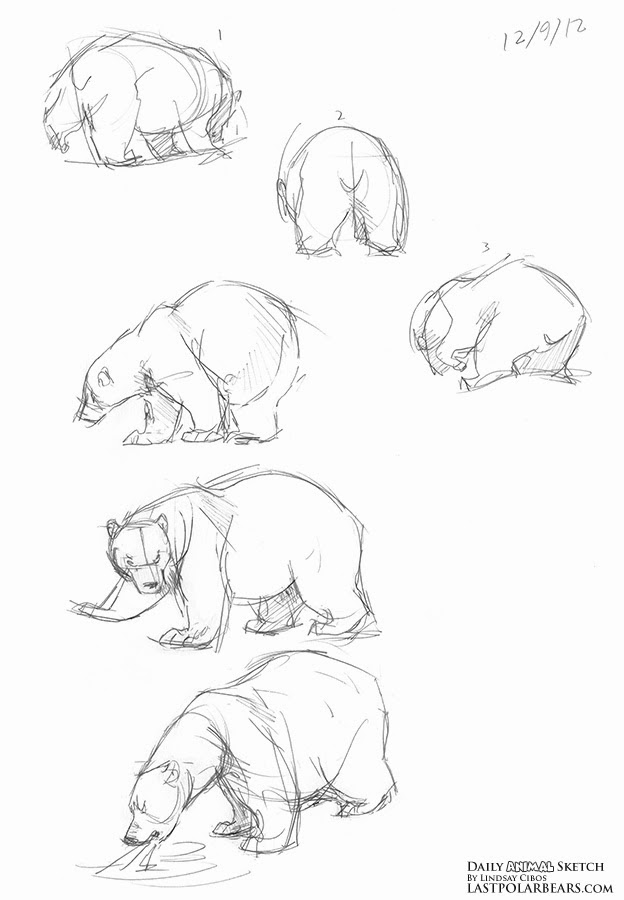 624x900 Lindsay Cibos' Art Blog Polar Bear Sketches