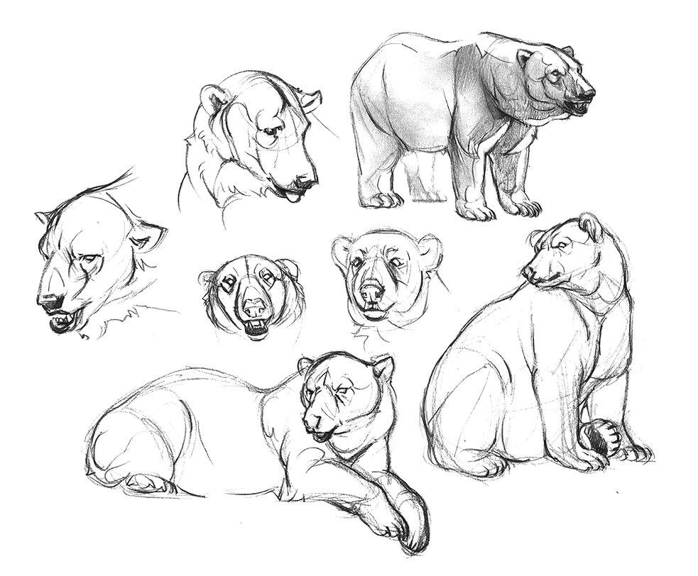 983x812 Polar Bear Sketches By Oxpecker