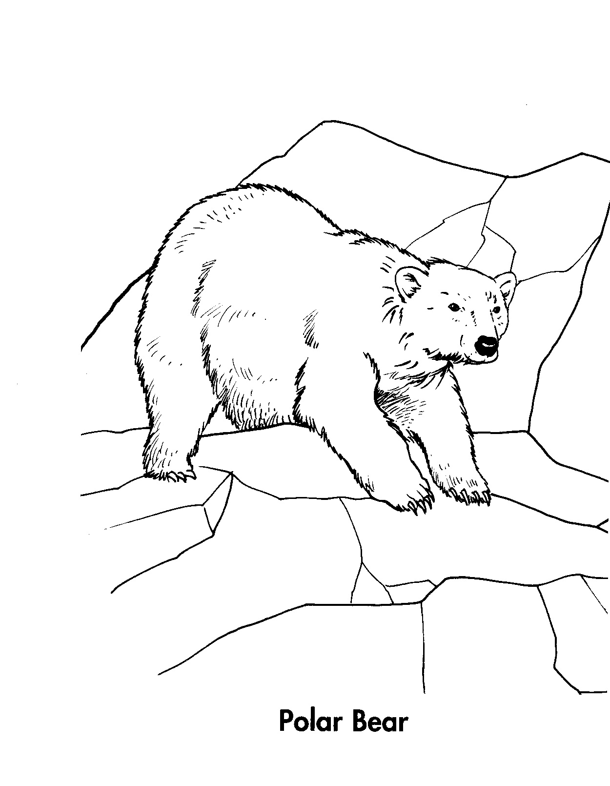 1250x1610 Printable Polar Bear Coloring Pages Coloring Me