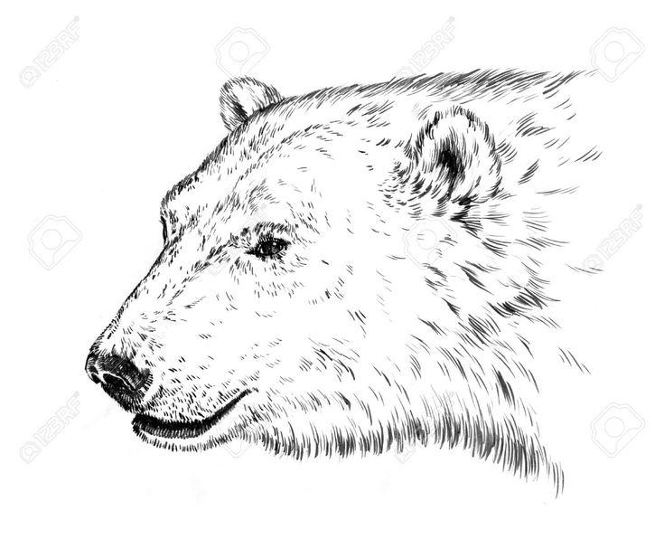 735x617 The Best Bear Sketch Ideas On Bear Drawing, Bear