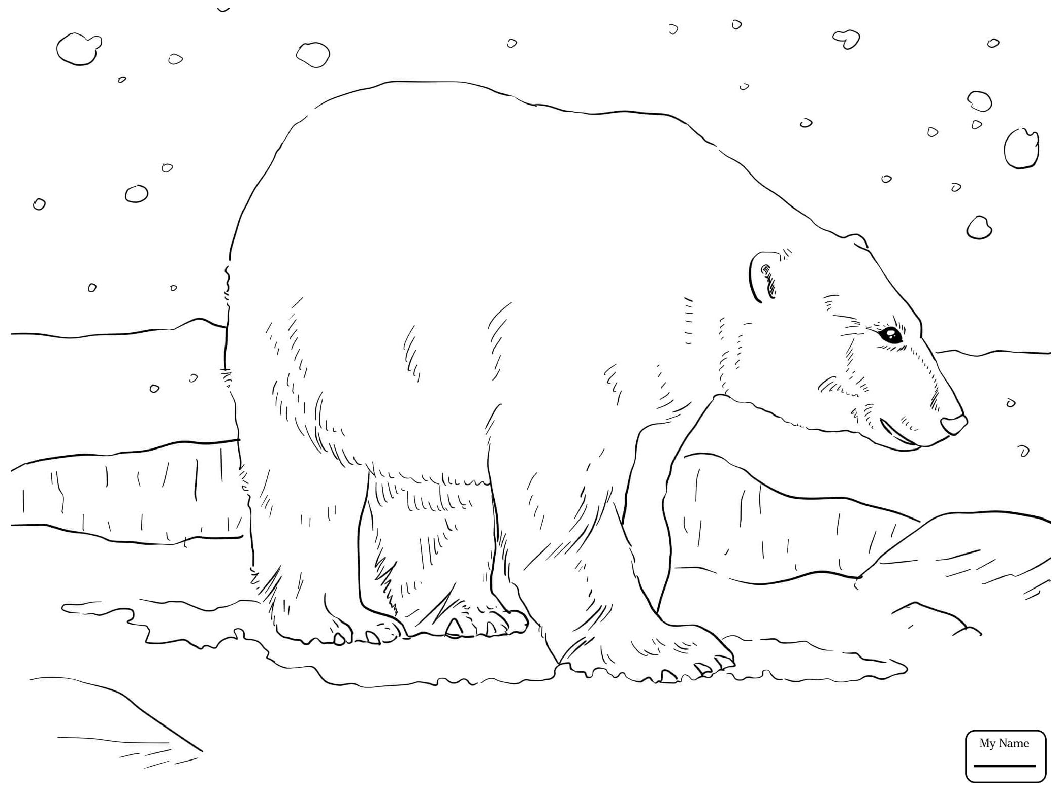 2089x1567 Coloring Pages Polar Bears Mammals Adult Polar Bear