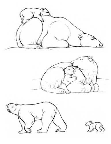 386x500 How To Draw A Polar Bear