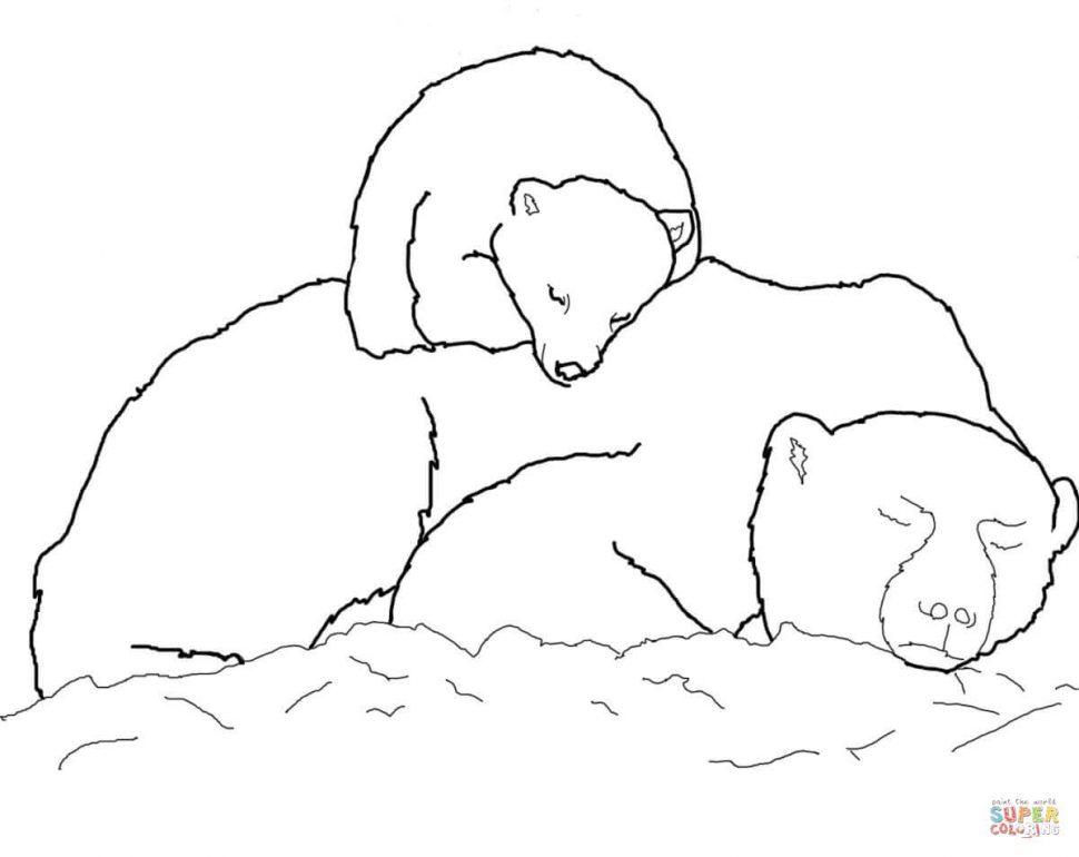 970x770 Coloring Awesome Coloring Book Polar Bear Cub Sleeping
